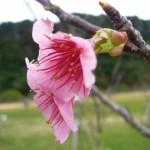 復縁で活用したい九州・沖縄のオススメお花見スポット5選